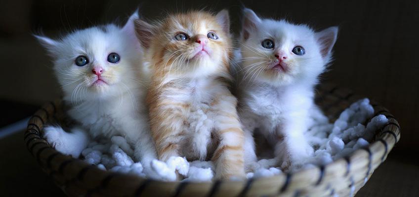 Gattini orfani: come prendersene cura