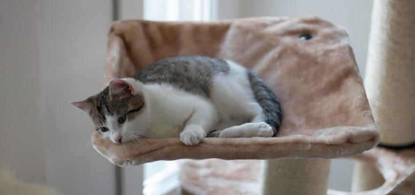 Arricchimento ambientale: una casa a misura di gatto