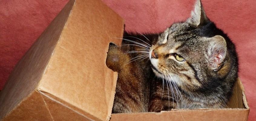 Perchè i gatti amano le scatole?
