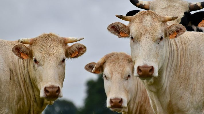 Rapporto ONU: mangiare meno carne per salvare il nostro Pianeta
