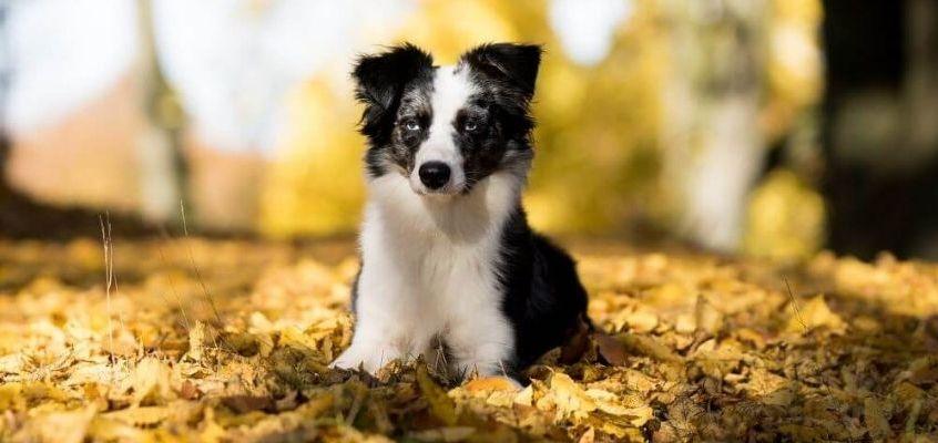 La muta nei cani e gatti col cambio di stagione