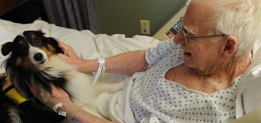 Pet therapy nel reparto di rianimazione: progetto unico in Italia