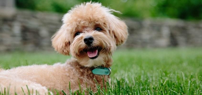 Come scegliere il nome per il proprio cane