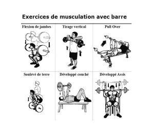 Cycle De Musculation Rappel Contenus Et Organisation AMLA