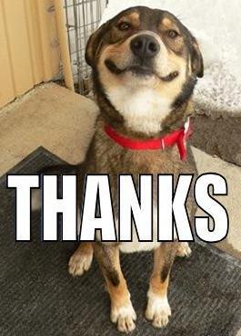 Thanks-Dog.jpg