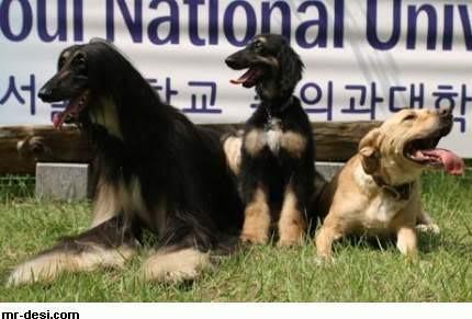Κυνηγετικός Σύλλογος Κατερίνης: «Τοξικό» το νομοσχέδιο για τα ζώα συντροφιάς