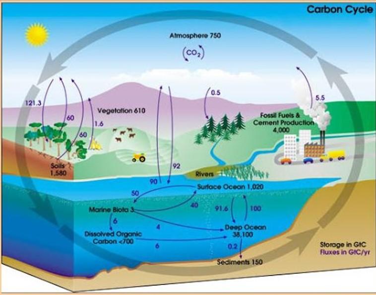 Εμείς και ο κύκλος του άνθρακα – Του Χρήστου Αποστόλου
