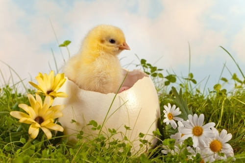 Animal welfare protection in the EU