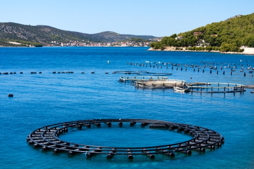 Strategic guidelines for aquaculture in the EU