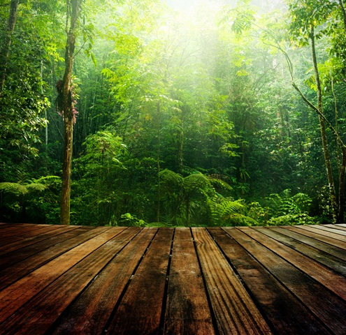 EU-Indonesia agreement on trade in legal timber