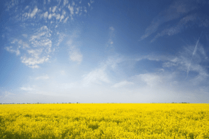 EU biofuels policy: Dealing with indirect land use change
