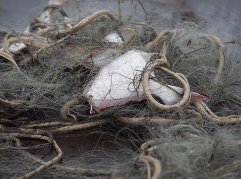 Overhauling fisheries technical measures [EU Legislation in Progress]