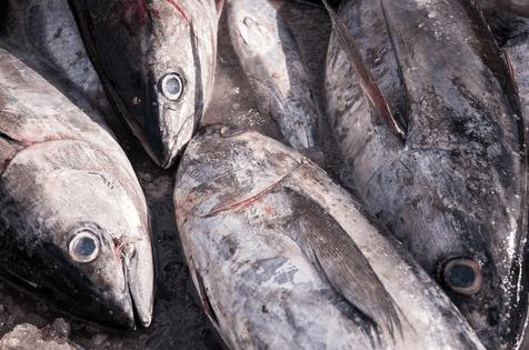 Transposing international measures for Atlantic tuna fisheries into EU law [EU Legislation in Progress]