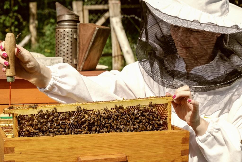 The EU's beekeeping sector