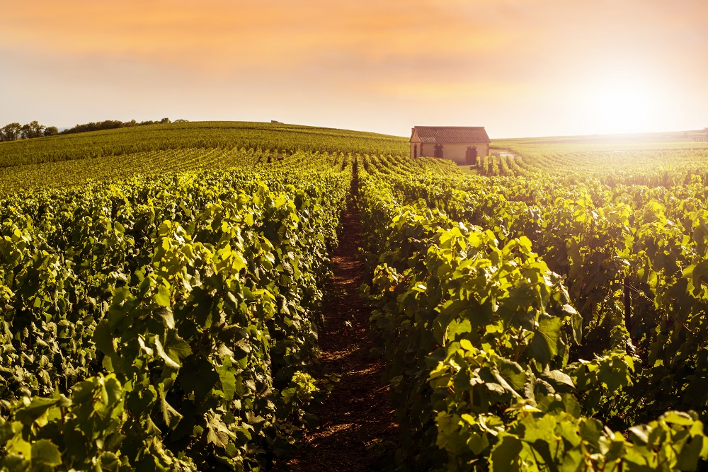 Champagne and sparkling wine producers [What Europe does for you]