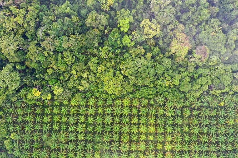 An EU legal framework to halt and reverse EU-driven global deforestation: European added value assessment