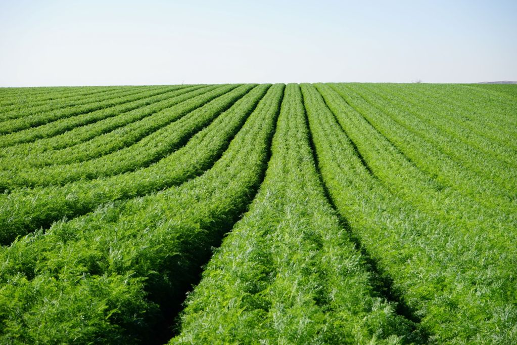 The cost of alternative crop protection practices