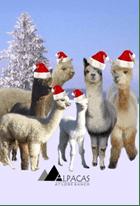 Christmas-alpacas