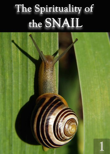 The-spirituality-of-the-snail-part-1