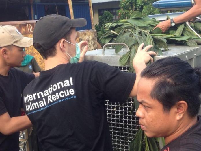 Wartawan berhasil mengambil gambar saat orangutan dievakuasi