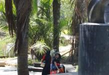 SEJAK 1848. Kelapa sawit di Kebun Raya Bogor, menjadi bukti bahwa kelapa sawit masuk Indonesia pada 1848. DOKUMEN KALTENG POS