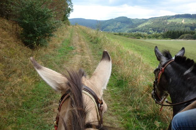 The riders view while riding a mule on a green road overlooking a valley in Germany