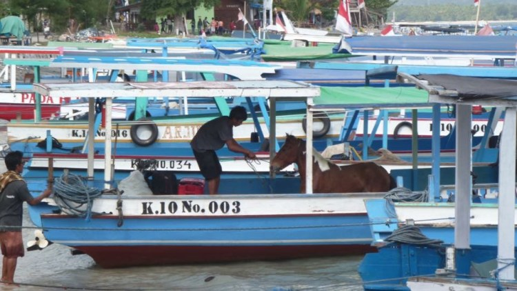 the ponies in paradise on the Gili Islands have a busy schedule