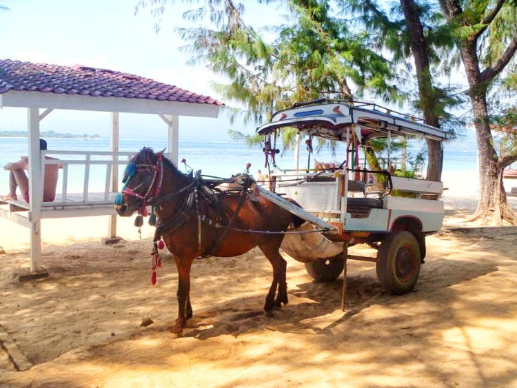 the ponies which are pulling the horse carriage on the Gili Islands are only about 12 hh high