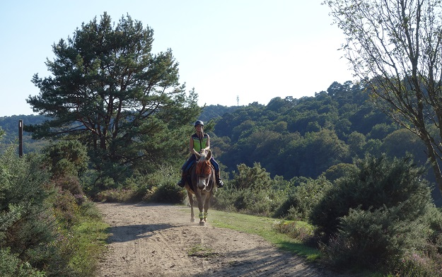Sari riding her mule in England on a sandy path through a forest