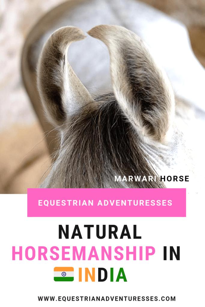 Marwari Horse ears at a natural horsemanship program in India Pinterest post