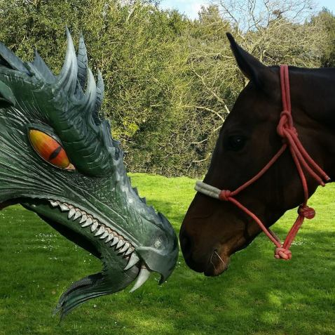 The horse which is used for historical re-enactments is inspecting a dragon sculpture with interest