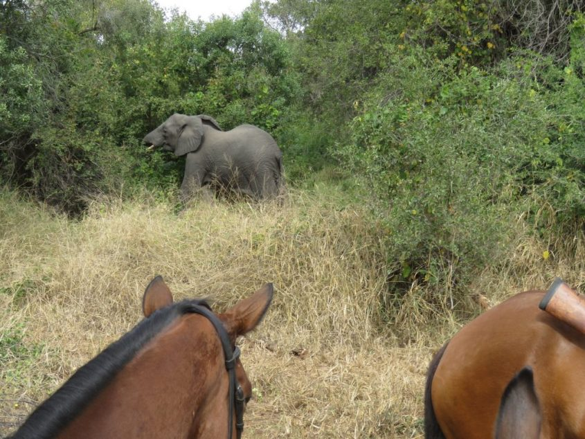 An elephant spotted during a horse riding safari in South Africa