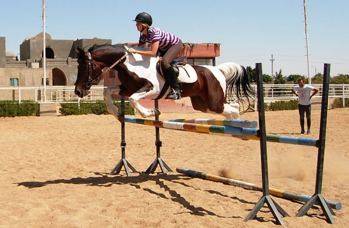 Krystal is clearing a showjumping fence in Egypt