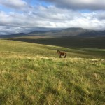 Resting near Mudale on a long distance horse ride
