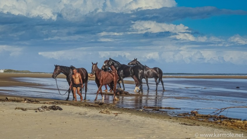 Horses led by a groom after having a swim in the ocean.