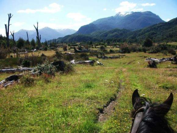 In Patagonia Horses have to be brave and trustworthy