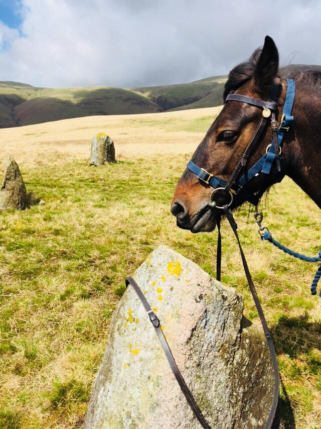 Fell pony Pansy is resting at a stone circle in The Lake District during long distance horse trekking in England