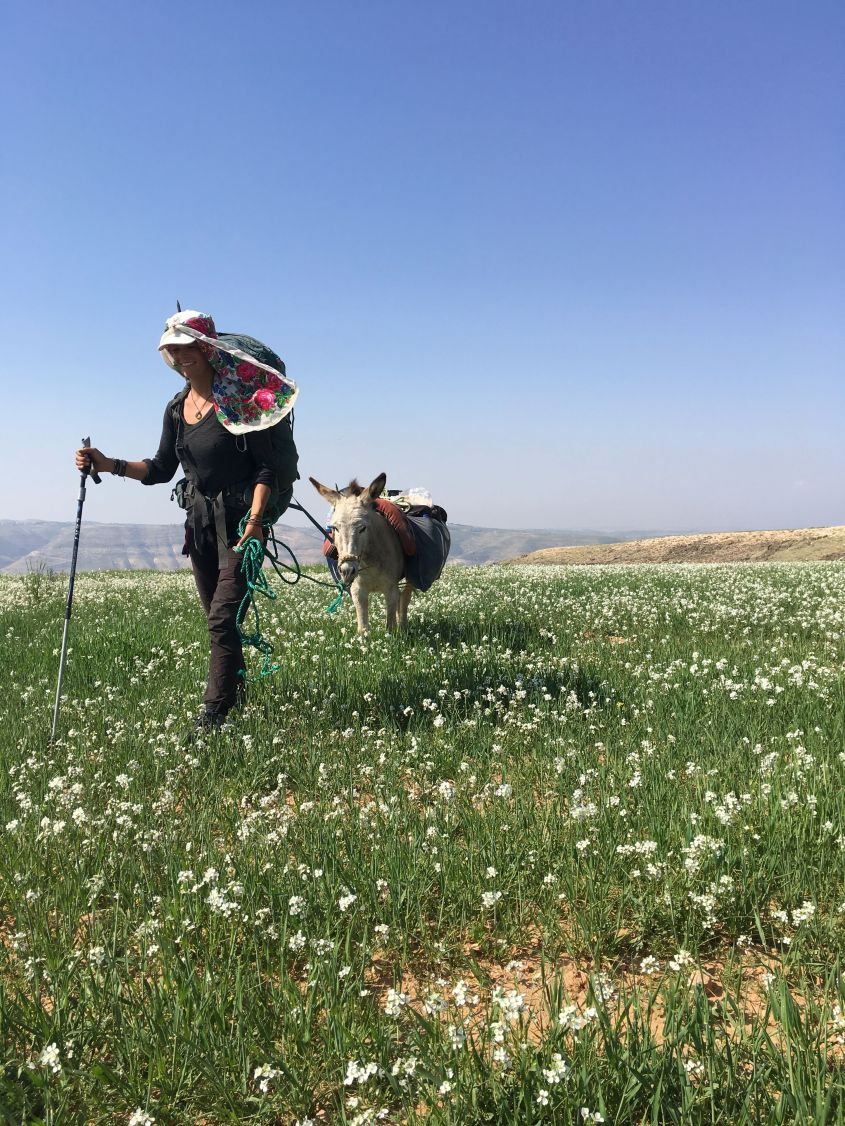 Walking through fields of flowers with my donkey along the Jordan Trail