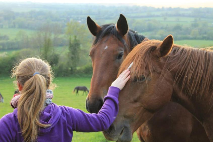Caitlin peting two semi-wild horses while working with horses in Ireland