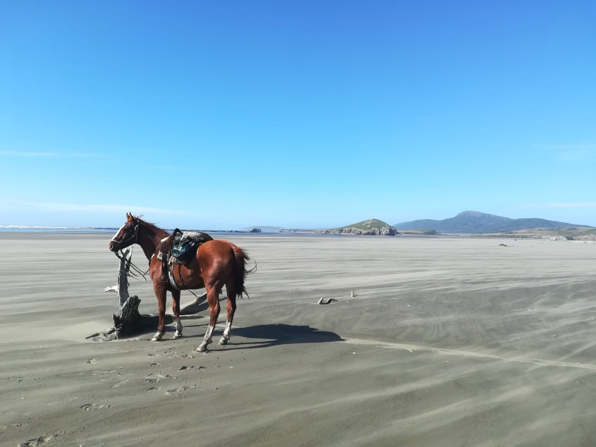 A Criollo horse is standing on the beach of Mitre Peninsula in Argentina during low tide. You can see a truly exhilarating spot for galloping