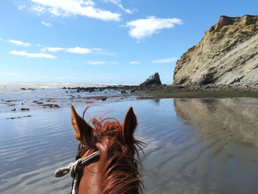 A horse is looking at the shores of Tierra del Fuego during a horse riding expedition in Argentina