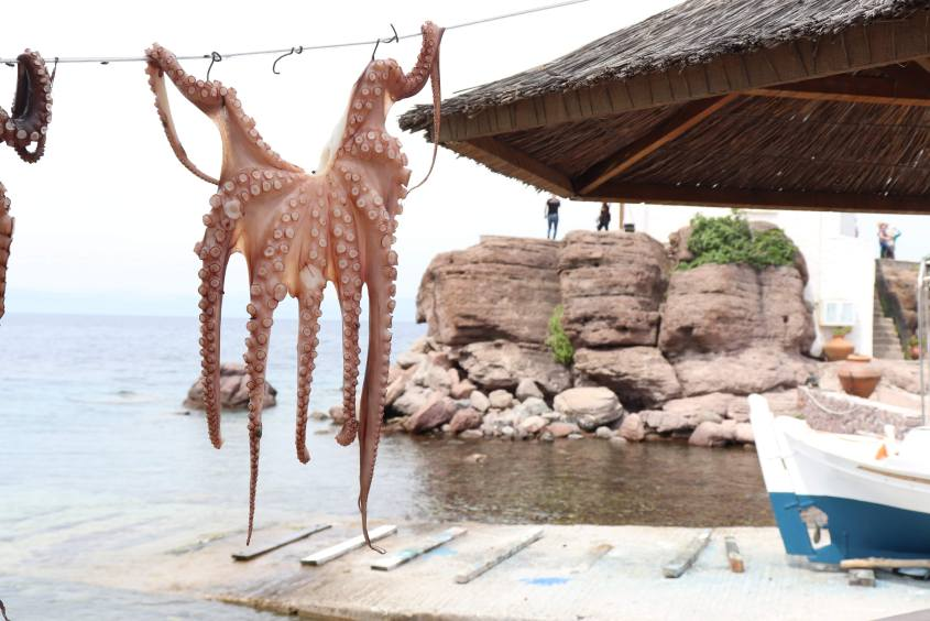 A small octopus is hung up to dry in a fishing village on Lesvos, Greece.