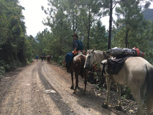 The hrse caravan making its way through Guatemala on a dirt road.