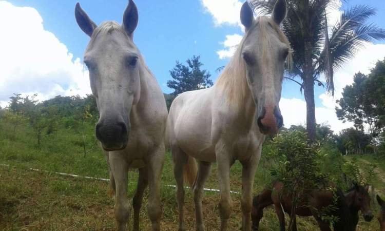 The horse which always escaped: Steven to the left. Here together with Payaso on the right.