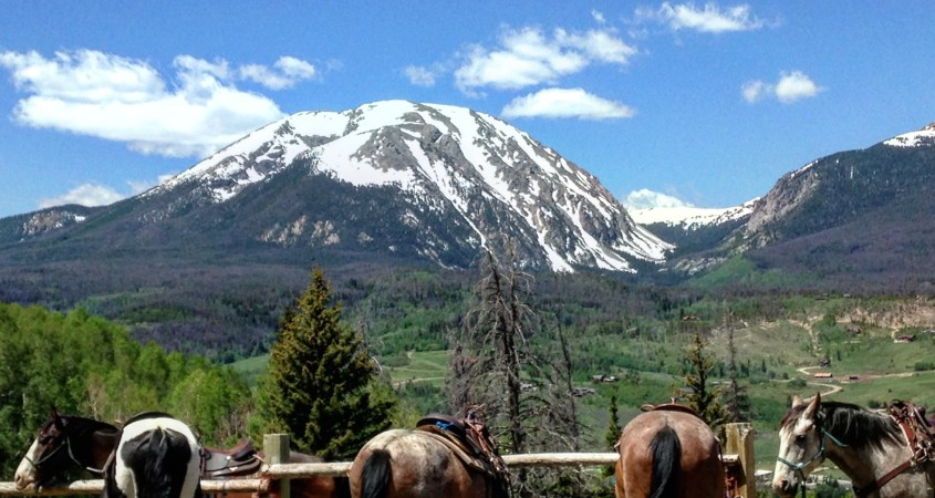 pack horses waiting patiently to be tacked up and taken out to transport goods through the Rocky Mountains