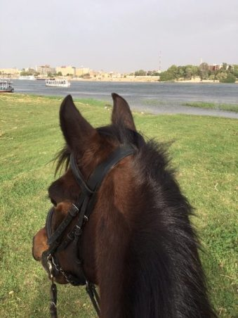 Horseback riding along the Nile in Egypt with a view between the horse's ears