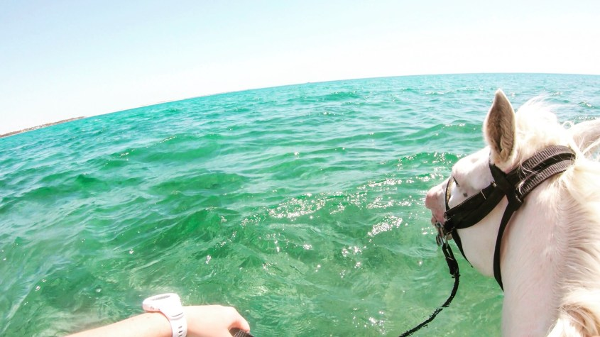A riders view from the back of a swimming horse in the Red Sea in Egypt