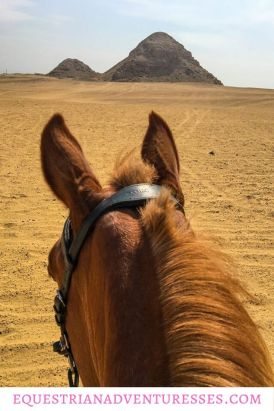 Horse riding in Egypt: A horse during an excursion to pyramids