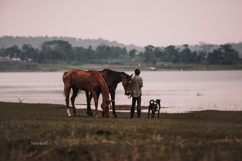 A woman with two horses and a dog is enjoying the view over a lake in India