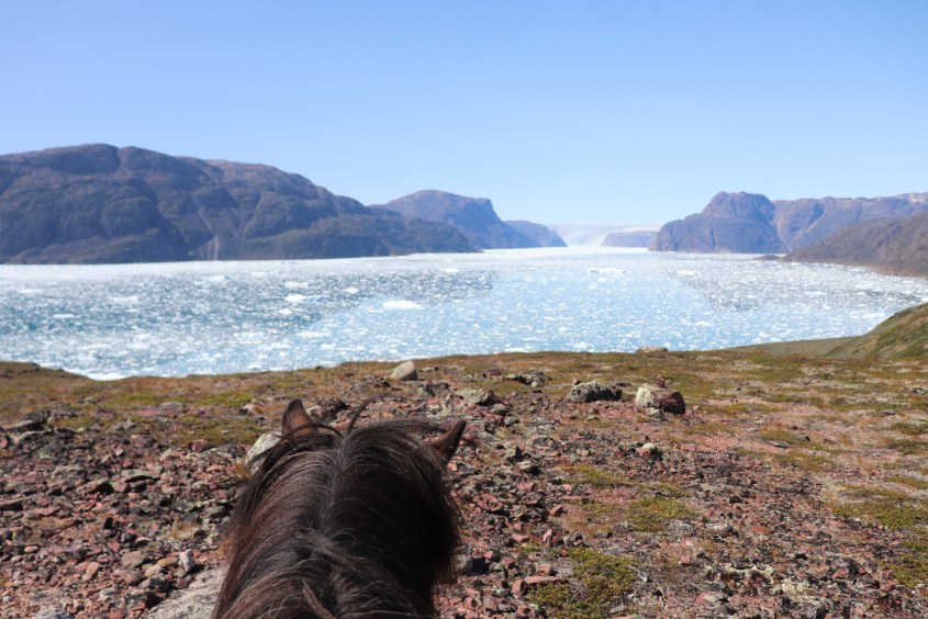 When you visit Greenland, horses are one of the best ways to experience the country as there are nearly no roads connecting the settlements.